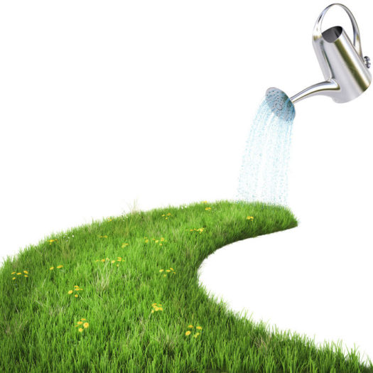 Nourish Leadership Empathy: Image is watering can on a road of grass
