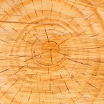 Team Building Across Generations: Image is cross section of tree trunk w/ rings.